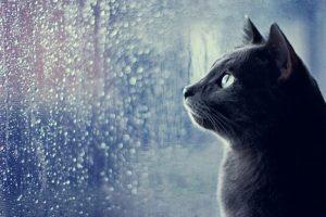 Не забудь зонт: в Запорожье весь день будет лить дождь