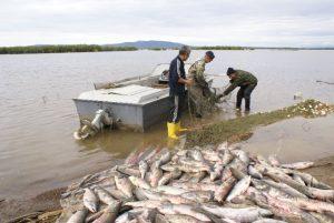 В Запорожской области браконьеры порыбачили на 80 тыс.гривен: злоумышленники задержаны