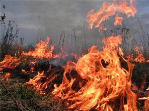 В Запорожской области горели поля
