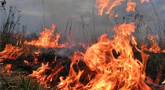 В Запорожской области за сутки 75 спасателей тушили 14 пожаров