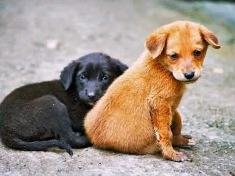 В Запорожье бесплатно простерилизуют бездомных животных
