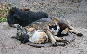 Над бездомными котами и собаками запорожцы предлагают поставить контроль полиции