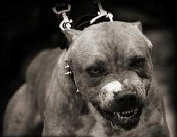В Запорожской области бойцовская собака напала на маленького ребенка