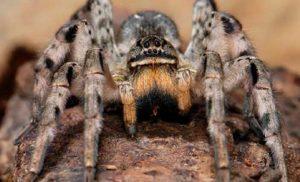 Осторожно: в Запорожье активизировались ядовитые пауки (Фото)