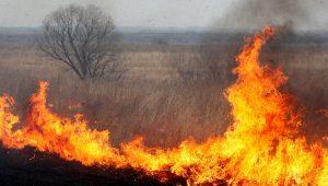 Запорожские спасатели за сутки ликвидировали 22 пожара в экосистемах