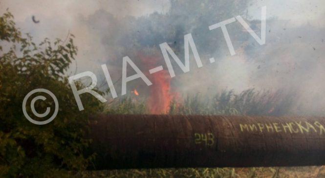 В Запорожской области пожар охватил балку (видео)