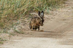 В объектив фотоаппарата запорожца попали дикие животные (Фото)