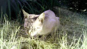 В Запорожье ищут хозяев кота (Фото)