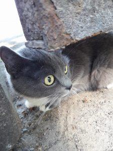 В Коммунарском районе Запорожья потерялся кот: ищут его хозяев (Фото)