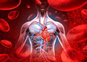 На деньги Всемирного банка запорожцам закупают оборудование для диагностики болезней кровообращения