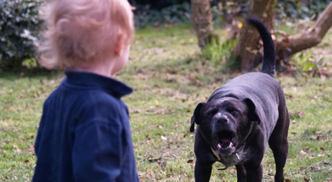 В Запорожье собака напала на маленького ребенка (фото)