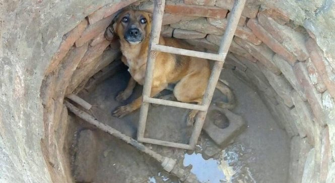 В Запорожской области собака упала в колодец: спасатели вытащили животное из опасности (Фото)