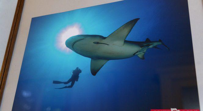 Вся правда об акулах: запорожская фотохудожница показала, как выглядит подводный мир