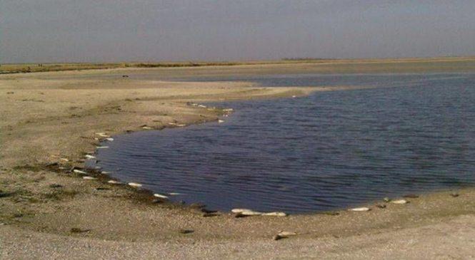 У Запорізькій області може статися черговий замор риби (відео)