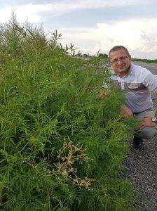 Соцсеть: трасса «Запорожье-Днепр», на которой недавно закончились ремонтные работы, зарастает опасным сорняком-аллергеном