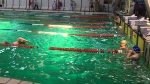 В Запорожье наградили победителей и призеров Кубка Украины по плаванию
