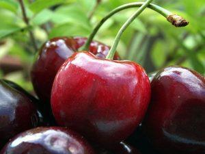 В Запорожской области появятся новые и популярные на мировом рынке сорта любимой ягоды