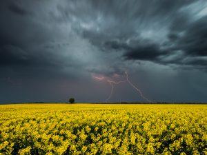Дожди, грозы, шквалы: запорожцев предупреждают о смене погоды