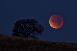 Фотофакт: жители Запорожской области наблюдали «кровавую Луну»