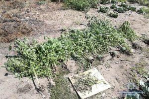 У Запорізькій області селянин зберігав метадон, канабіс та ростив коноплю (фото, відео)