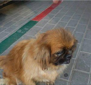 В Запорожской области хозяева уже третий год ищут собачку с инвалидностью