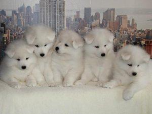 «Нелюди»: на запорожском курорте хозяева зарабатывают деньги на собаках древнейшей породы