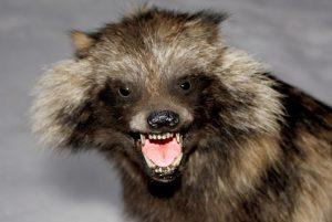 У Запоріжжі карантин через сказ — хворіла екзотична тварина