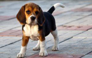 Служба защиты животных в Запорожской области продолжает ловить собак
