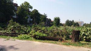Полиция Запорожья проверяет законность вырубки деревьев в парке Яланского