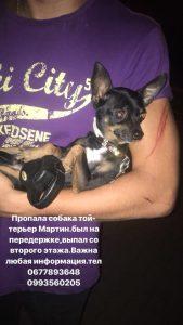 В Запорожье ищут собачку, которая выпрыгнула со второго этажа и убежала (Фото)