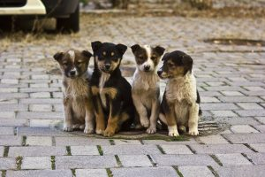 Запорожцев зовут на акцию в поддержку бездомных животных