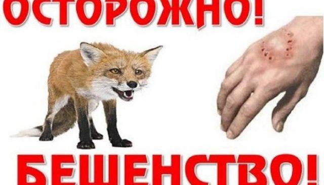В Запорожской области против бешенства животных используют авиацию