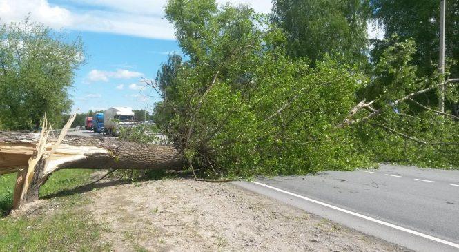 В Запорожской области за сутки из-за непогоды упало два дерева
