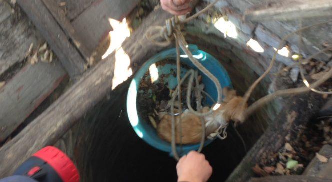 В Запорожской области в заброшенный колодец упал щенок: спасатели вытащили животное (Фото)