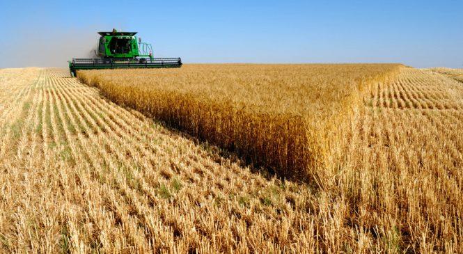 Засуха в Запорожской области привела к неурожаю зерновых