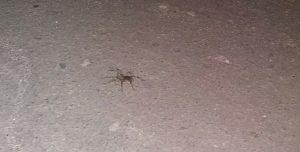 У одному з міст Запорізької області навала павуків (фото)