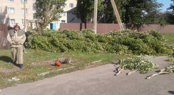 В Запорожской области на женщину упала ветка с оголенным проводом: пострадавшая погибла (Фото)