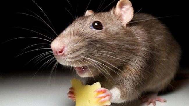 В Запорожской области яд для крыс разбрасывают в местах скопления детей и домашних животных (Фото, видео)