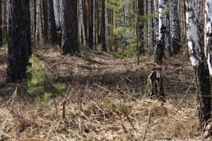 В Запорожской области нашли тело исчезнувшей 4 дня назад женщины