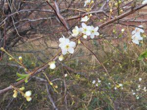 Фотофакт: в Запорожской области зацвели фруктовые деревья