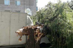 Фотофакт: в Запорожской области на кабину авто упало большое дерево