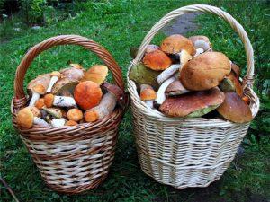 В Запорожской области продолжают травиться самостоятельно собранными грибами