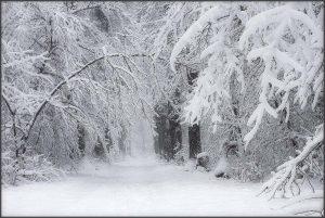 Зима близко: на запорожском курорте наблюдали за снегопадом (Видео)