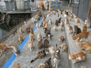 В Бердянске планируют создать приют для кошек