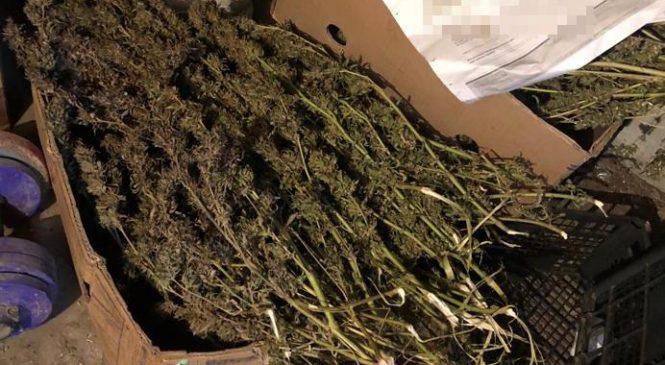 У Запорізькій області селянин зберігав наркотикі на більше ніж пів мільйона гривень (фото)