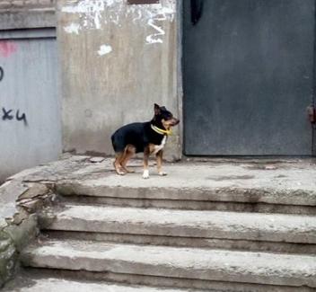 В Запорожье разыскивают хозяев потерявшейся собаки с двумя ошейниками