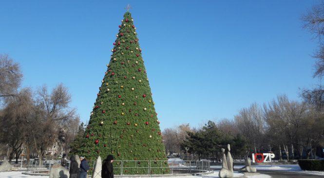 В центре Запорожья уже установили главную новогоднюю ёлку города (ФОТО)
