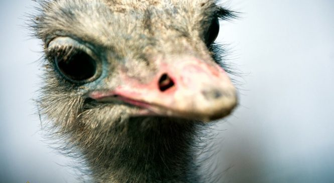 В сети появились снимки любопытного страуса, суровой обезьяны и колючего дикобраза из зоопарка в Запорожской области (Фото)