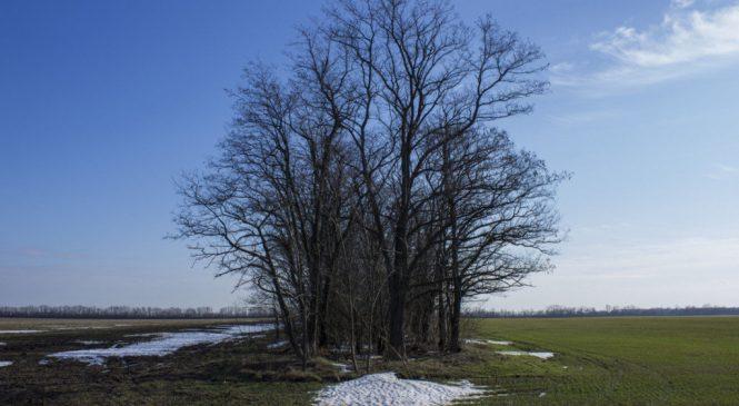 В Запорожской области в лесополосе местные жители нашли останки человека