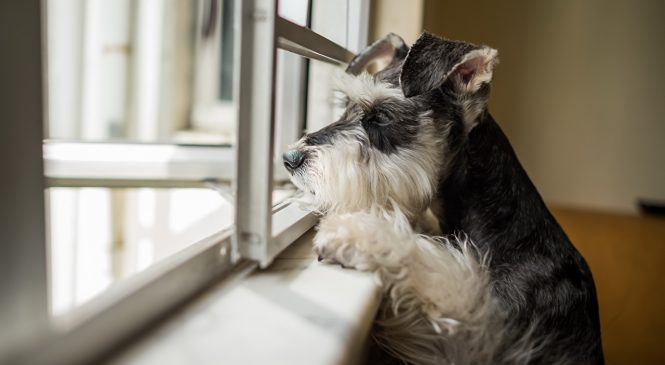 В Запорожской области старая одинокая женщина уже около года удерживает в своей квартире без выгула троих собак (Видео)